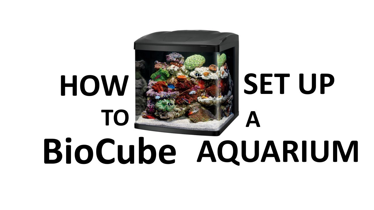 a step by step instruction for setting up an aquarium Q11089 - howto: how to setup a refugium by daniel s, marinedepotcom reef squad.