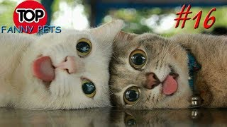 ПРИКОЛЫ 2019 ТОП СМЕШНЫХ ВИДЕО С КОТАМИ Смешные животные Смешные кошки TOP FUNNY PETS 16