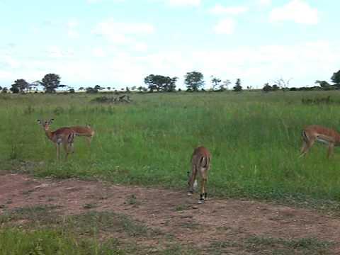 Tanzania Mikumi Safari 062