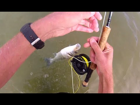 Shore Saltwater FLY FISHING - Sea BASS On Sandeel Flies