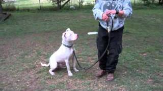 Deaf Dogs, Blind Dogs, Deaf and Blind Dogs