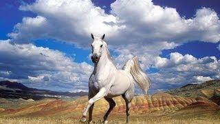 Christmas Song 'young horse' ; Новогодняя песня 'Молодая лошадь'