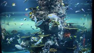 Download Lagu A Million Dreams Short Cover (Violin + Ukulele) @SEA Aquarium Mp3
