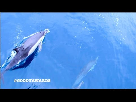 2 Schools of Dolphins Dance in Newport Beach CA