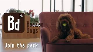 The healthy lifestyle programme for dog people