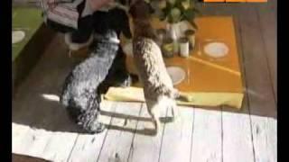 Ресторан для собак: находка для торгового центра