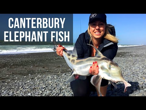 Elephant Fish In Canterbury (Season 4 Ep 5)