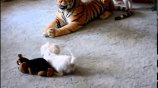 Кот сожрал собаку полностью! жесть(Самые смешные видео 2015 года. Самые ржачные приколы. Подписывайтесь на наш канал и продлевайте свою жизнь..., 2015-03-16T19:41:04.000Z)