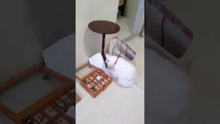 暴れる猫 超かわいい thumbnail
