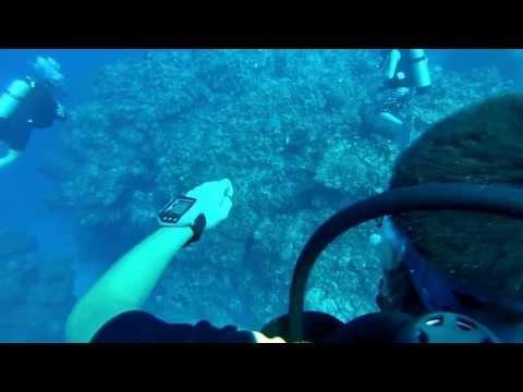 Open Water Dive Bahamas 2013