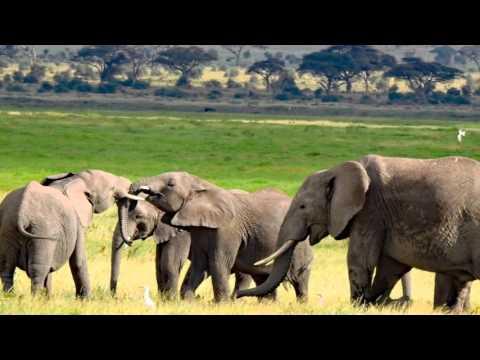 Kenia - 2016 - Amboseli