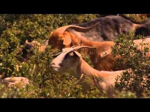 4f53bc1c32 Όσο υπάρχουν Έλληνες - Στα ορεινά βοσκοτόπια (Documentary) - YouTube