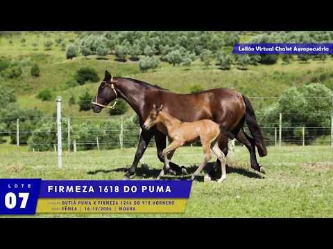 LOTE 07 - Firmeza 1618 do Puma
