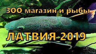 Зоомагазин. Аквариумные рыбы
