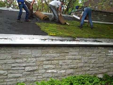 Unrolling Green Roof Sedum Mat Youtube