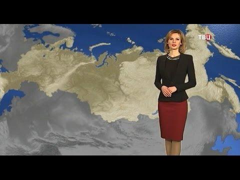 шин, телеведущие твц прогноз погоды фото бампер будет