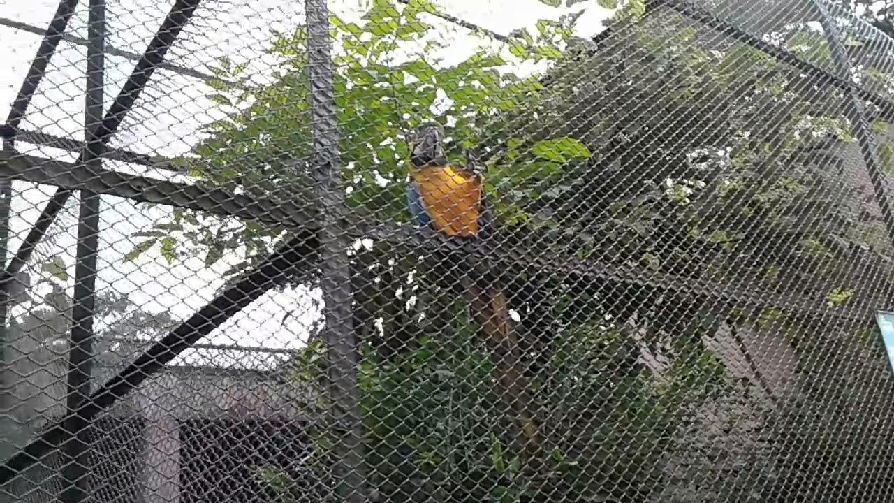 Guwahati zoo, a beautiful Parrot talking. Captured by Fuzail ...