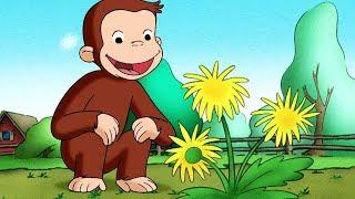 Georges le Petit Singe 🐵Le Troupeau De Vaches 🐵Saison 1  🐵Dessin Animé 🐵Animation Pour Enfants