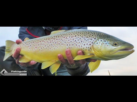 Orkney Trophy Trout Trip Video. Fishinguide Scotland