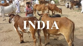 India/Burhanpur Cattle market  Part 48