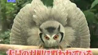 Shapeshifter Owl ...Weird
