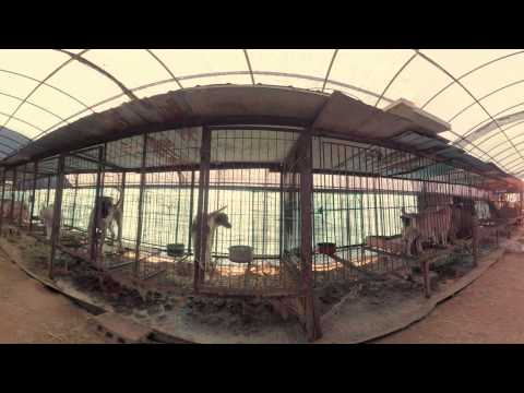 Dog Meat Farm 360º | South Korea — VR video