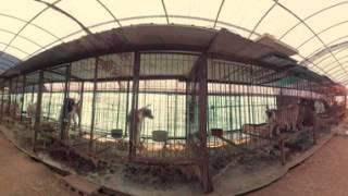 Dog Meat Farm 360º | South Korea — VR video