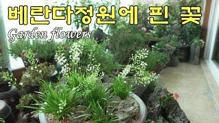 SUB) 6월 아파트 베란다 정원에 핀 아름다운 꽃들,…