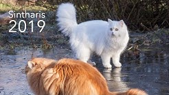 Unsere Deutsch Langhaar Katzen im Dezember 2019
