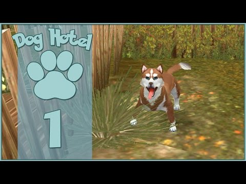 dog-hotel-||-our-first-four-footed-guest!!---episode-#1