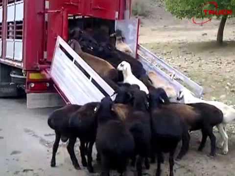 Полуприцепы скотовозы
