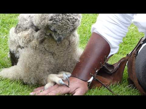 The World's Cutest Baby Owl Video