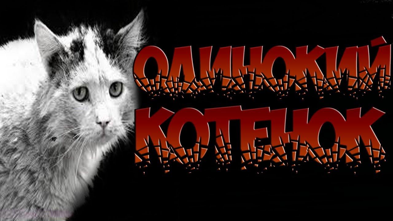 Страшный кот на ютубе
