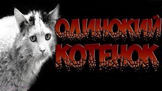 Это не СТРАШНЫЕ ИСТОРИИ НА НОЧЬ - Одинокий котенок - Задумайтесь