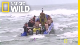 Dive-Team Leader Mark Addison | Shark Attack