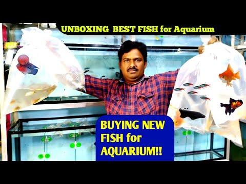 BUYING NEW FISH For AQUARIUM!! ||  BEST FISHES FOR AQUARIUM