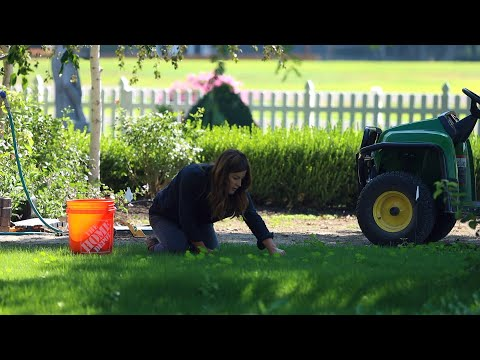 Weeding the New Grass & Planting Dogwoods and Ornamental Grass! 🌿🌾💪 // Garden Answer