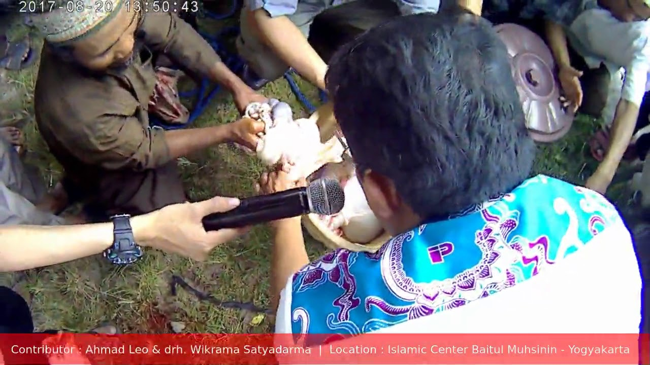 Gambar Syarat Kambing Aqiqah Tangerang Jual Gambar