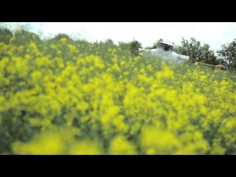Gruff Rhys - Honey All Over