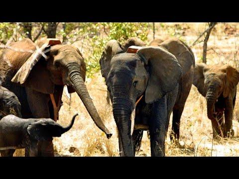 Elephant poaching crisis in Mozambique