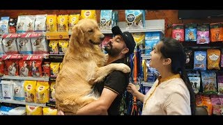1st time Dog owner Golden Retriever  by Baadal Bhandaari Pathankot Punjab 9878474748