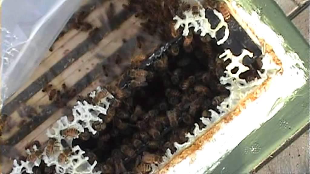 vinterfodring af bier