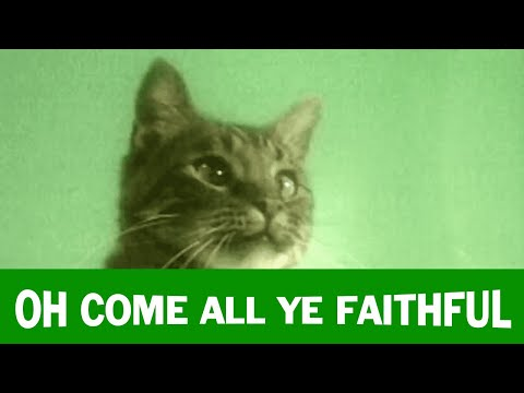 Jingle Cats 'Oh Come All Ye Faithful'