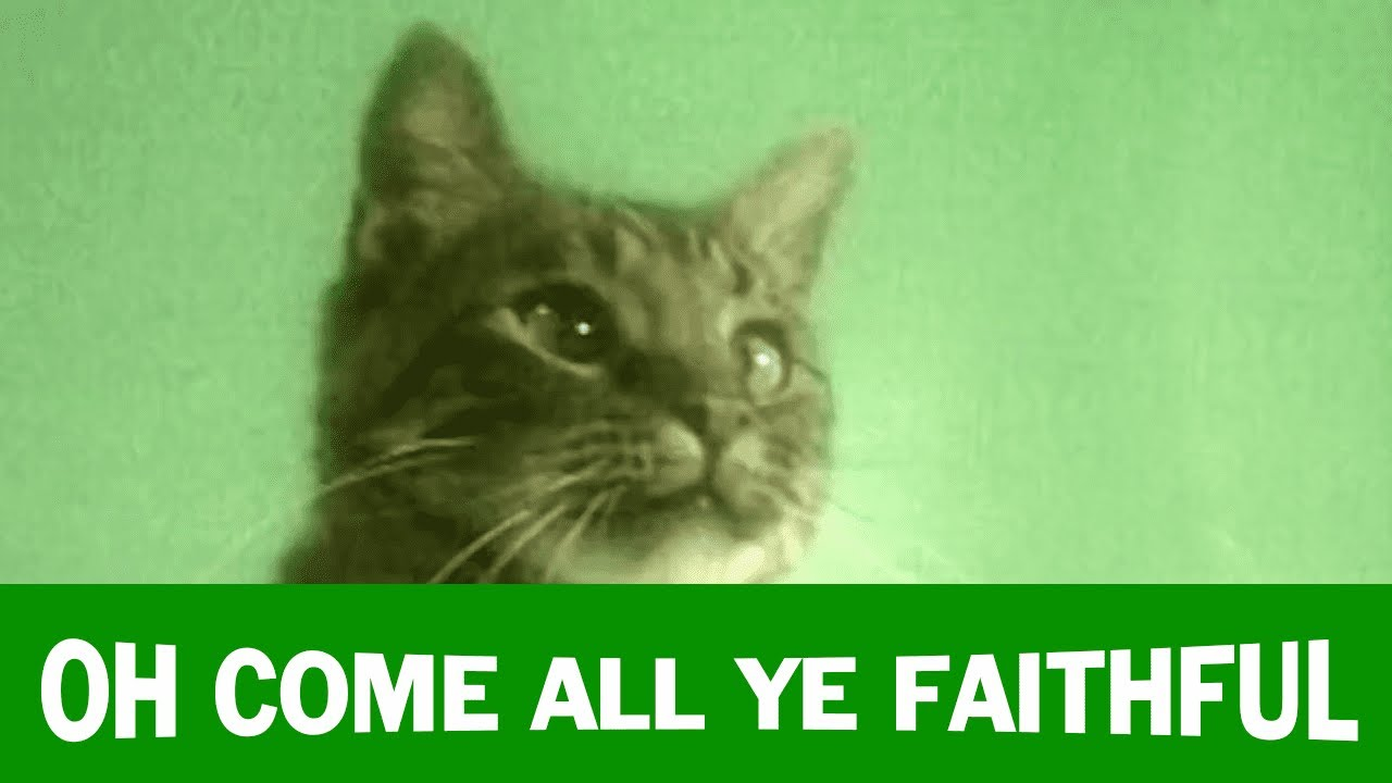 album jingle cats meowy christmas