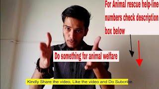 Animal rescue help-line Number|Pet Adoption|Animal welfare|Moto Vlogging.