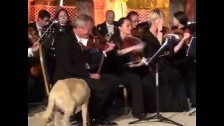 Efes'teki 'sanatsever' bir köpek, klasik müzik konserine katıldı