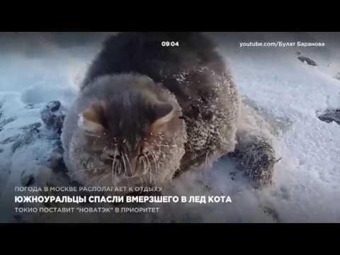 Южноуральцы спасли вмерзшего в лед кота