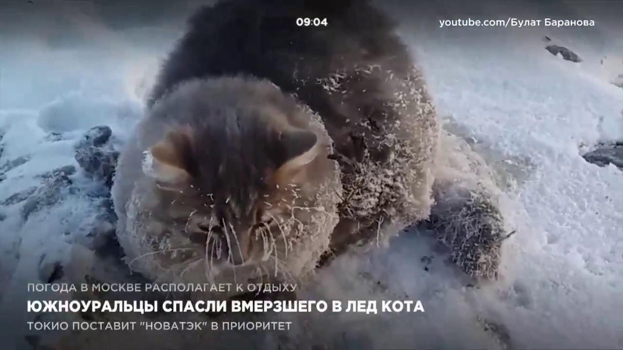 Спасли кота ютуб