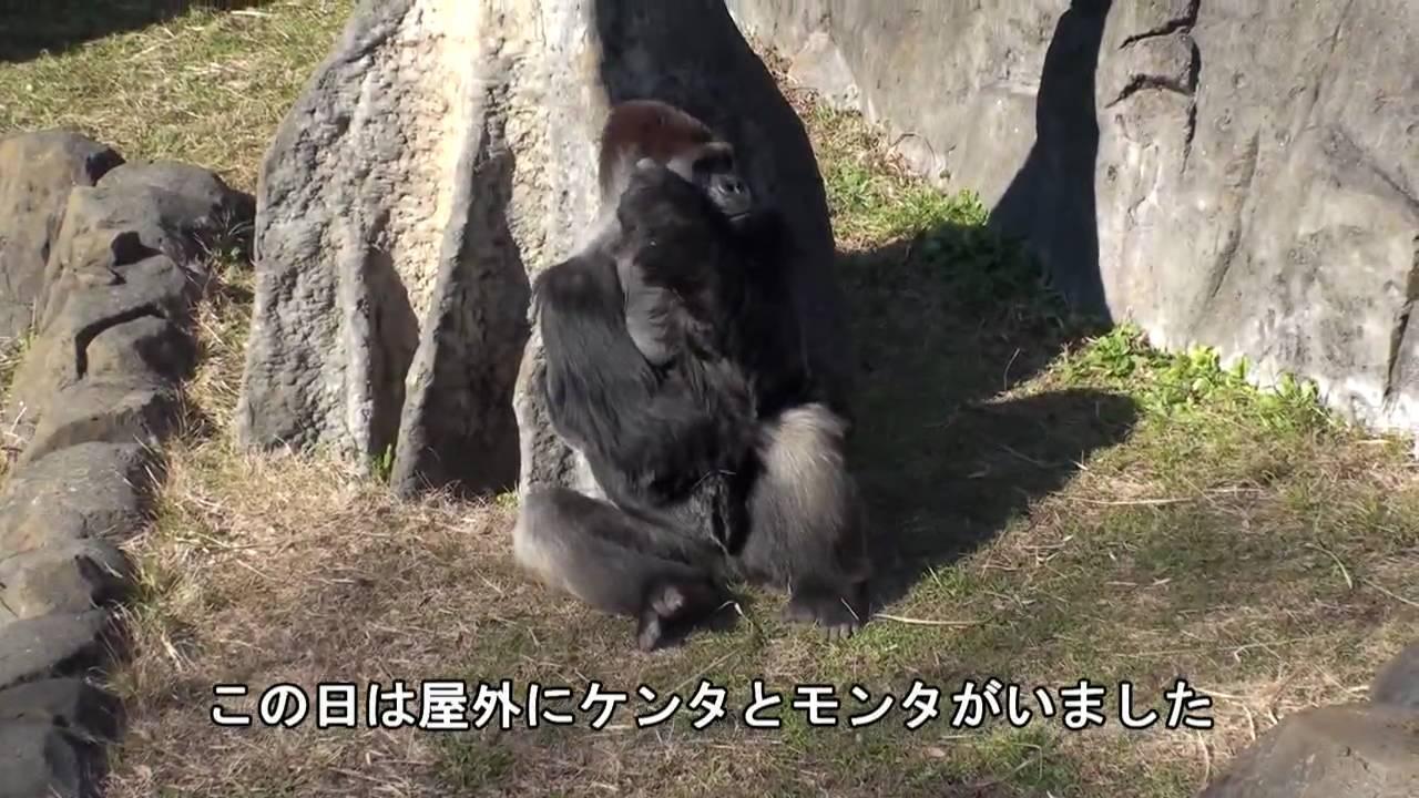 千葉 動物 公園