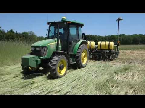 ORGANIC NO-TILL: Roller crimping rye cover crop for soy planting